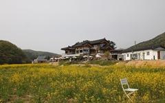 요즘 경주 핫플, 하동 저수지 유채꽃밭