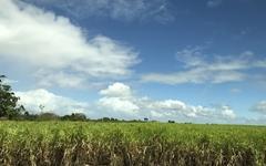 쿠바와 사탕수수, 떼려야 뗄 수 없는 애증의 관계