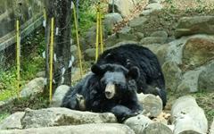 [사진] 구례에 오면 반달가슴곰 친구와 만나요