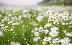 [사진] 흰 눈 내린 서산 용장천... '5월의 꽃' 만개