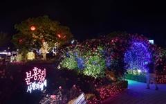 [삼척] 삼척장미공원 21일부터 야간 조명 개장