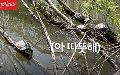 일광욕하는 자라 만날 수 있는 곳, 서울에 있다