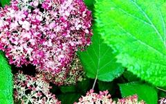 [사진] 여름꽃 향연 시작된 청산수목원