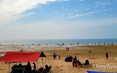 '벌써 여름?' 충남 만리포해수욕장 가득 메운 텐트들