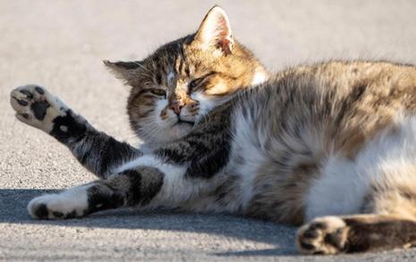 제주에서 경기도로, '첩보작전'이 된 고양이와 이사하기