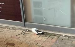[사진] 새들도 비 피할 공간이 필요하다