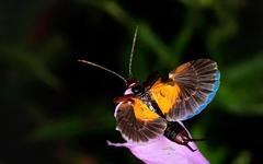 석씨 성을 받은 나비와 조씨 성을 따른 나비가 있다?