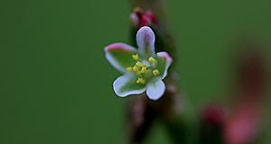 너무 작아서 곤충도 못 알아보는 꽃