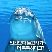 인간보다 돌고래가 더 똑똑하다고?