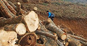 환경올림픽? 수백년 된 삼림 '싹둑'
