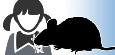 학교가 고교생 동원 쥐 3256마리 죽여 돈벌이