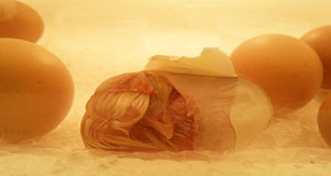 마트 계란이 병아리로...진짜 되네요
