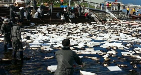 여수박람회장 앞 바다 기름 유출 범인은 잡았지만...