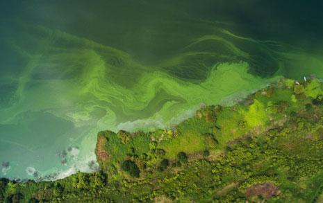 4대강, 독성물질 확산  국가재난사태 선포해야