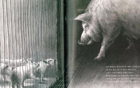 처음이자 마지막 외출,  돼지 331만 마리 떠났다