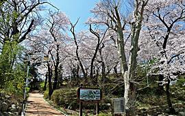 벚꽃놀이 대신 역사 배운 현산공원