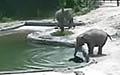 """""""첨벙!"""" 물에 빠진 아기코끼리 구하기"""