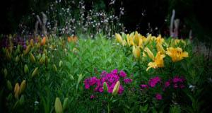 월드컵공원,  비 이슬 꽃밭을 품다