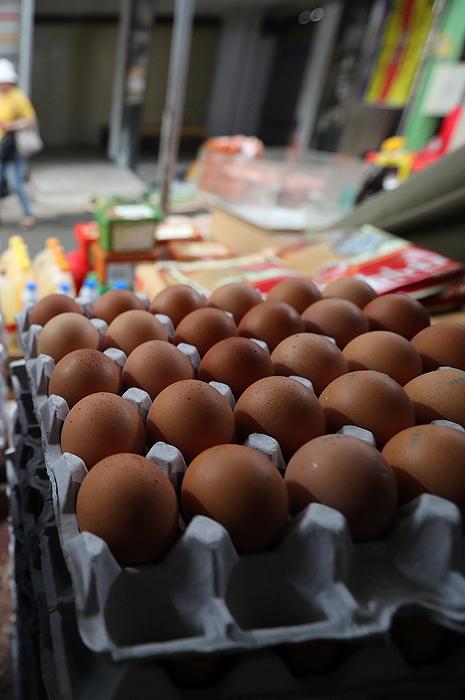 살충제 검출 달걀 파동 예고된 인재였다