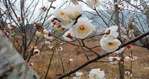 벌써 봄, 봄, 봄이 오네요!