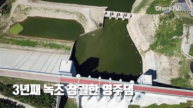 3년째 녹조 창궐한 영주댐