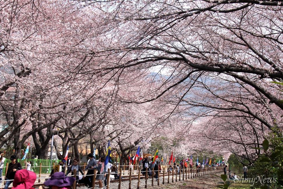 30일 오후 창원시 진해구 경화역 벚꽃.