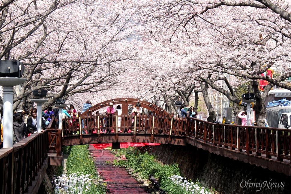 30일 오후 창원시 진해구 경화천 벚꽃.