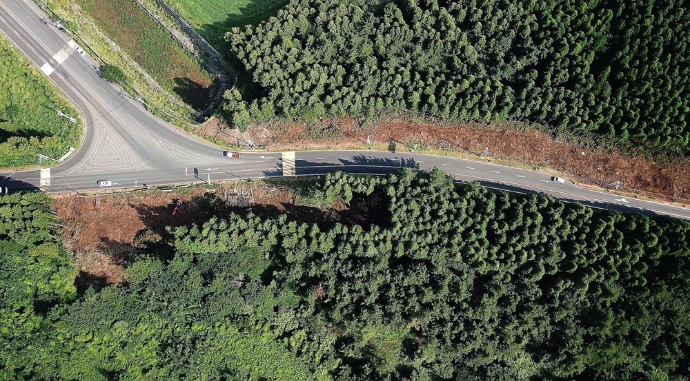 '찢겨진' 제주 삼나무숲 9일 오후 제주시 비자림로 삼나무숲이 도로 확장·포장 공사로 나무가 잘려져 나가 속살을 벌겋게 드러내 있다. 제주도는 지난 2일부터 8일까지 제주시 조천읍 대천동 사거리에서 금백조로 입구까지 2.9㎞에 이르는 비자림로 일부 구간에 대해 도로 확장공사를 진행하고 있다. 비자림로는 우리나라에서 가장 아름다운 도로로 선정된 곳이기도 하다.