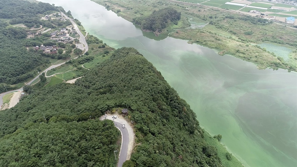 8월 13일 촬영한 낙동강 도동서원 쪽 녹조.
