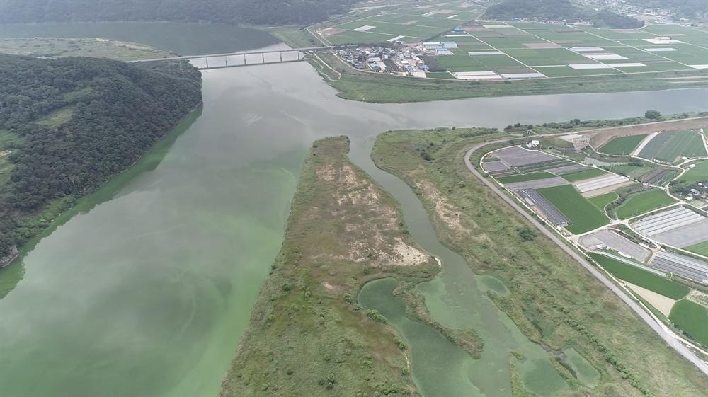8월 13일 촬영한 낙동강 합천 율지교 부근의 녹조.