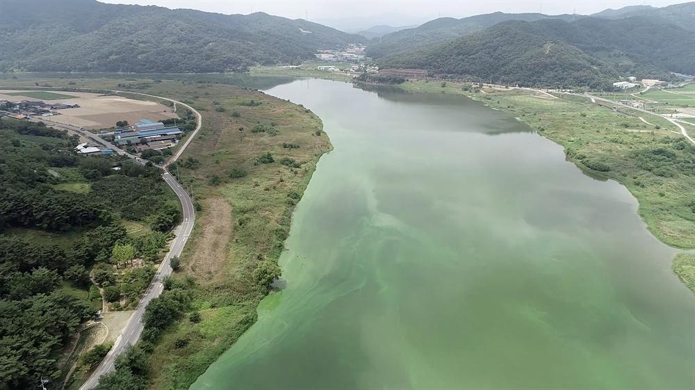 8월 13일 촬영한 낙동강 도동서원 부근의 녹조.