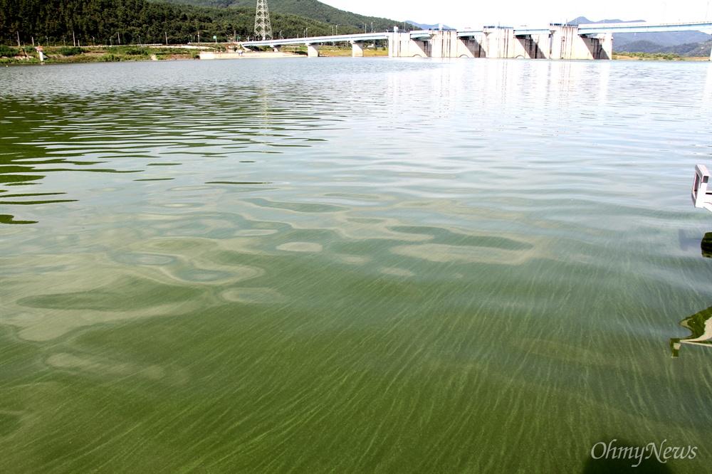8월 19일 낙동강 창녕함안보 상류의 녹조.