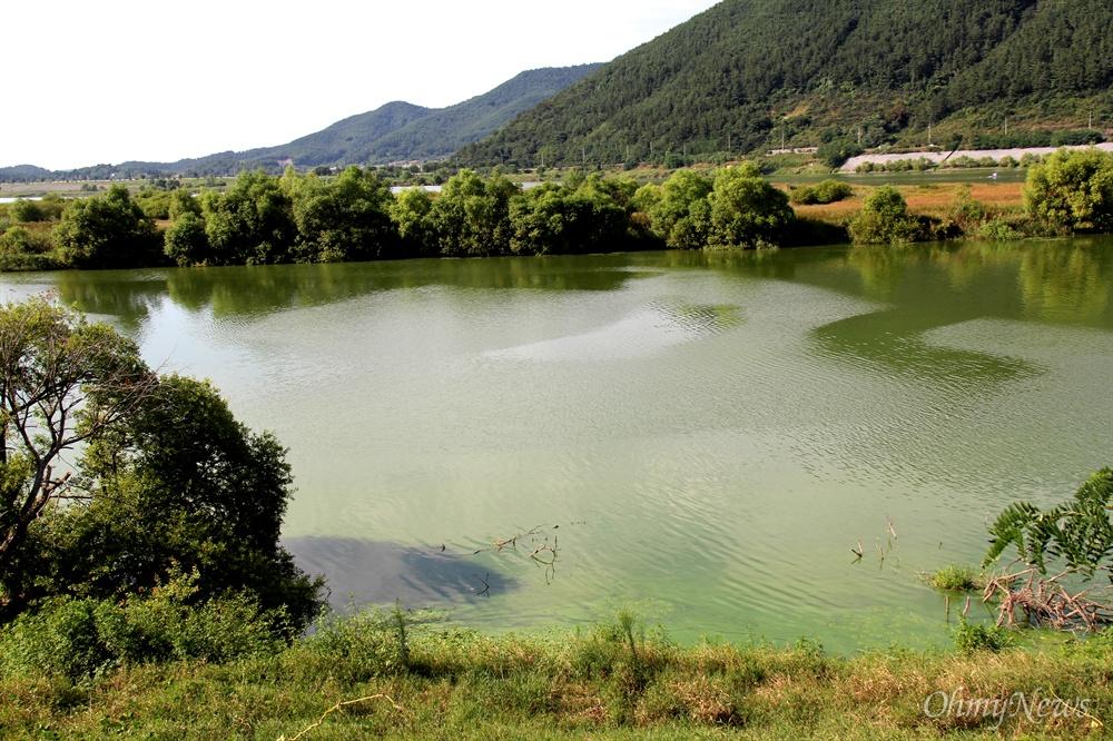 8월 19일 낙동강 창녕함안보 우안 상류 쪽에 발생한 녹조.