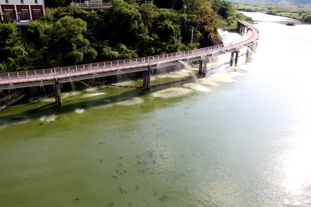 8월 19일 낙동강 창녕함안보 하류에 있는 창원 본포취수장에 녹조저감시설이 가동되고 있다.