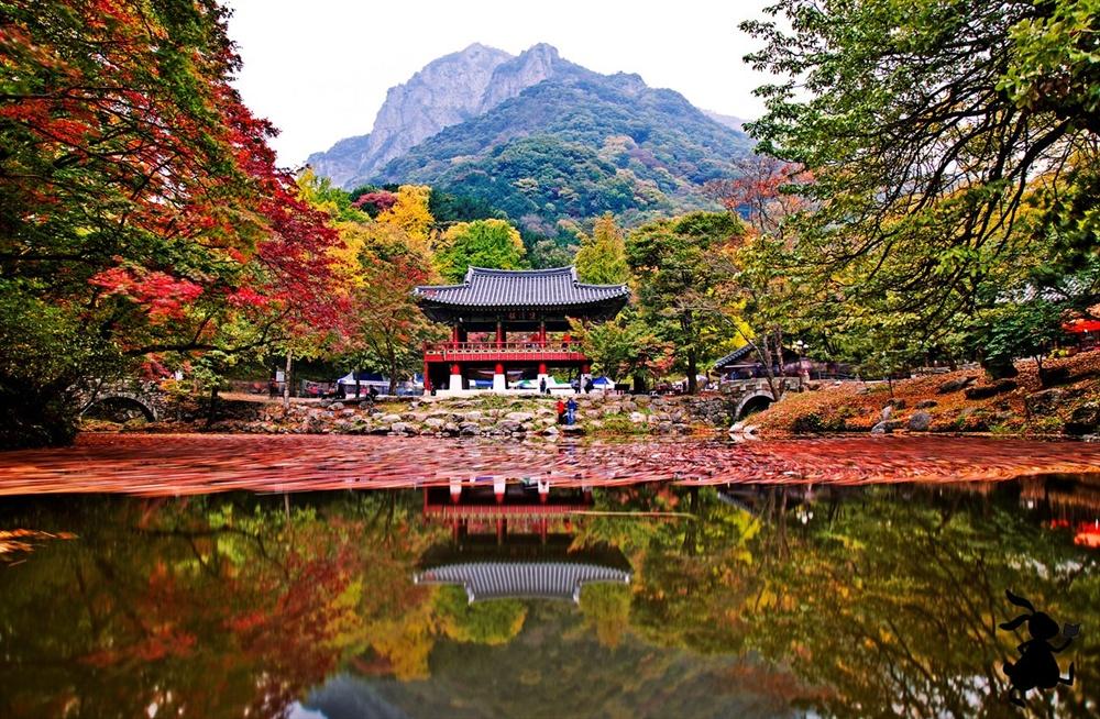 장성 백양사의 가을  장성 백암산은 미려한 가을의 백양사를 품고 있다.