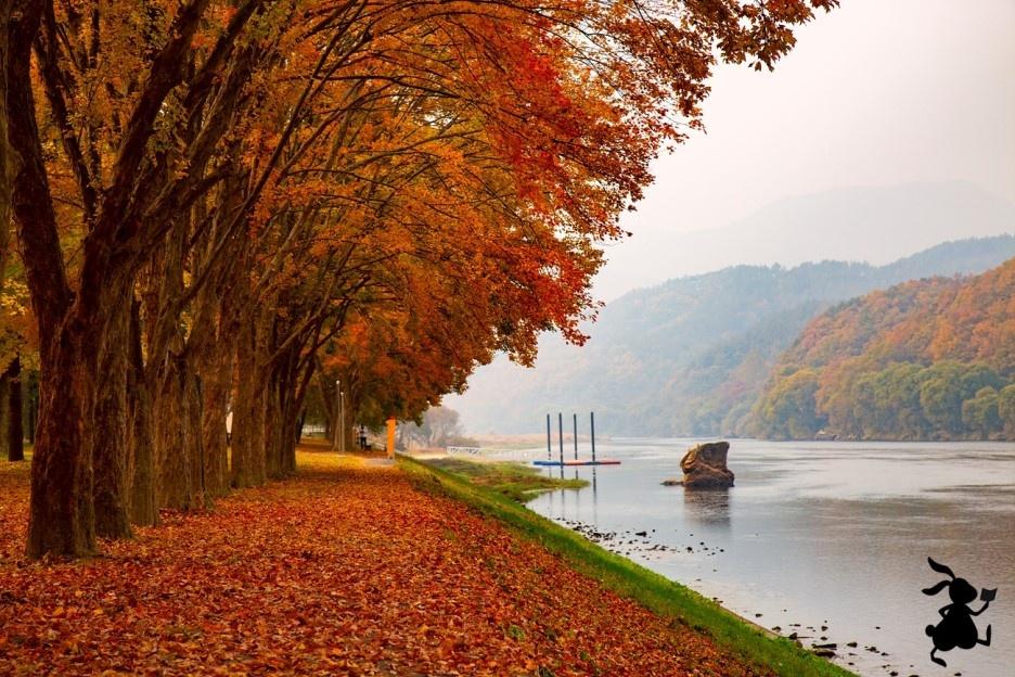 영동 송호관광지의 가을 오색찬란한 가을빛으로 물든 송호관광지와 금강.