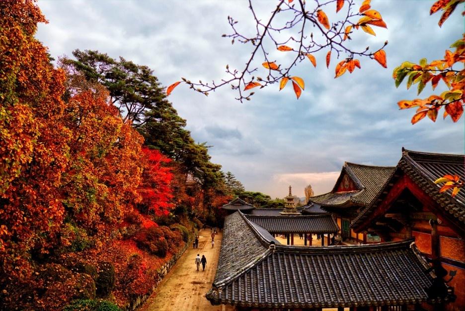 불국사 관음전의 가을 풍경 대웅전 뒤편 무설전의 회랑에 울긋불긋 단풍이 물들다.