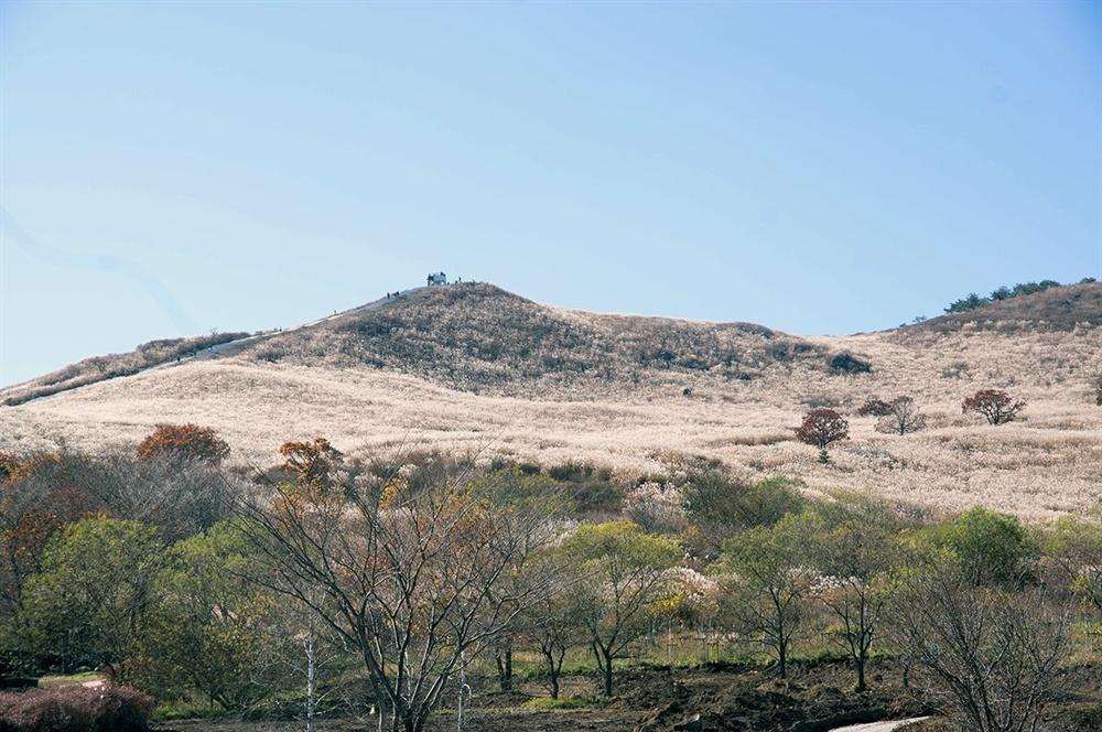 진입로로 들면서 바라본 산의 인상은 밋밋하고 평이해 보였다. 그러나 이 인상은 억새군락지로 들어서면 착각임을 깨닫는다.