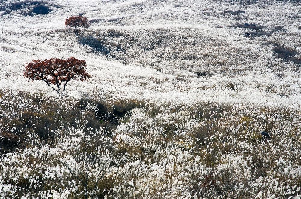 햇빛을 받아  하얗게 빛을 내는 억새 이삭은 더러는 눈밭처럼 보이기도 했고 더러는 하얗게 빛나는 메밀밭 같기도 했다.