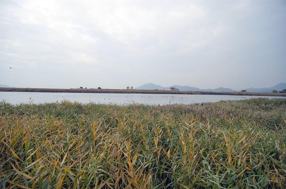 순천만의 해수역은 75㎢가 넘는데 5.4㎢(160만 평)의 빽빽한 갈대밭과 끝이 보이지 않는 22.6㎢(690만 평)의 광활한 갯벌로 이루어져 있다.