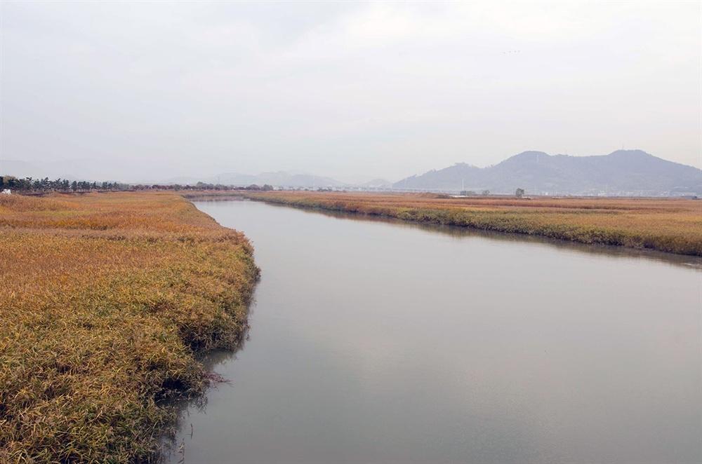 무진교 아래로 흘러 순천만으로 드는 물은 순천 도심을 가로질러 온 동천(東川), 민물과 바닷물이 만나는 수역인 기수(汽水)지역이다.