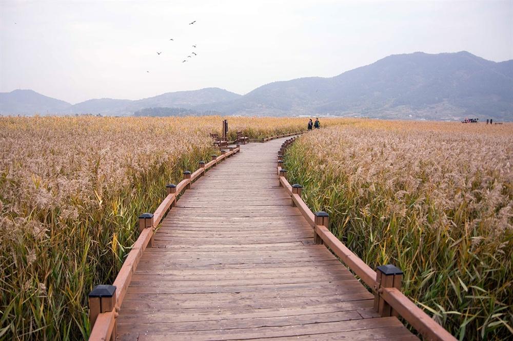휘도는 탐방로 저편으로 떠오르는 새떼들의 모습과 주변 풍경은 저마다 자기 자리를 지키고 있었으나 갈대밭을 배경으로 살갑게 어우러지고 있었다.