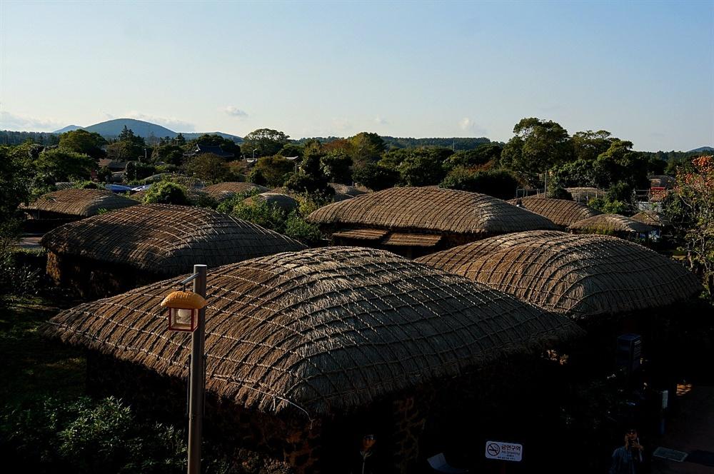 성읍마을 지붕  지붕은 한라산 기슭에서 자라는 새로 이어 반짝인다. 바람 무서워 잔뜩 웅크린 모양으로 둥글넓적하여 멀리 있는 오름 능선 닮았다.