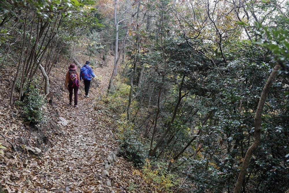 달마고도의 숲길. 달마산의 산허리를 따라 너덜과 숲길을 지난다. 눈도, 마음도 행복한 길이다.