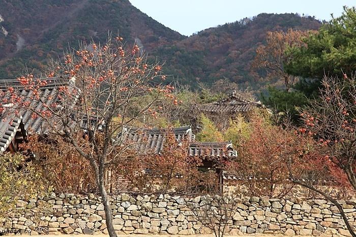 외암마을의 가을 풍경 외암 이간의 호에서 마을 이름이 비롯됐다고 한다.