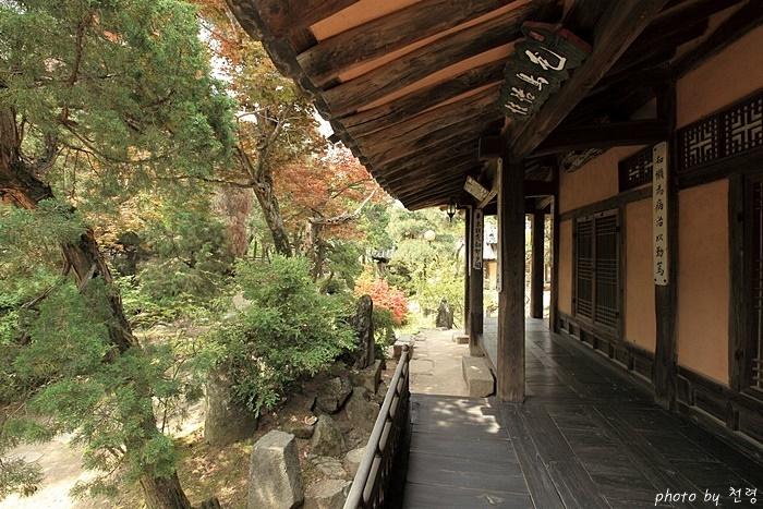 건재고택 전통 정원과는 달리 사랑채 앞 마당에는 수목들이 우거져 있다.