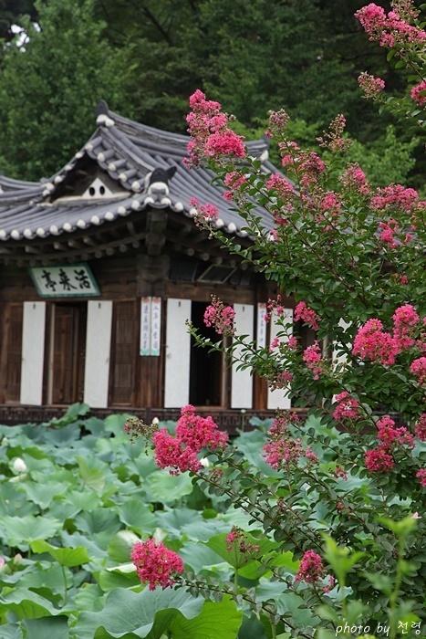 활래정 활래정은 여름이면 백일홍과 연꽃이 만발하여 선계를 연상시킨다.