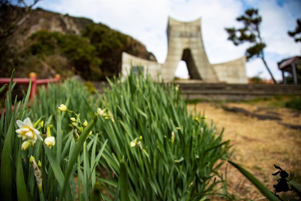 산방산 하멜기념비의 수선화  하멜기념비까지 조성된 길에 조우한 수선화는 아직 피지 목한 채 고개숙이고 있다.
