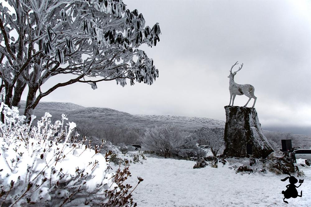 1100고지의 사슴동상  한라산을 상징하는 하얀 사슴인 '백록'은 1100살(?). 그럼1100고지는 백록이 살던 곳인가.