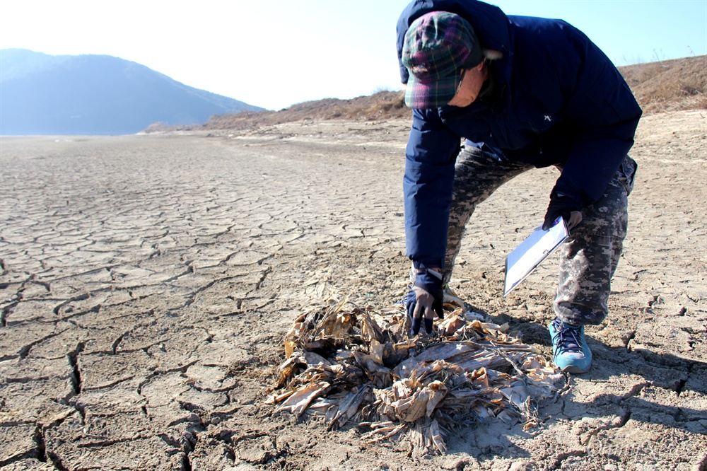낙동강 합천창녕보 수문 개방 이후 상류에 있는 강 바닥에서 4대강사업 당시 놓아두었던 폐자재들이 드러났다.